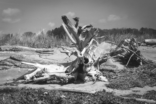 Driftwood 4...